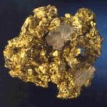 goldnug01-310x210
